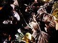 Tessuto di Foglie.jpg