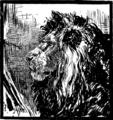 Tete de Lion par Paul Meyerheim.png