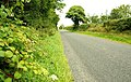 The Carnreagh Road near Castlewellan (1) - geograph.org.uk - 905351.jpg