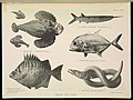 The Great Barrier Reef of Australia (PLATE XLVII) (7044669807).jpg