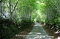 The Green Lane (25943587476).jpg