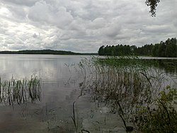 The Lake Onkivesi in Väänälänranta, Maaninka, Finland.jpg