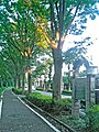 The Longest Zelkova Avenue in Japan - Route 463.jpg