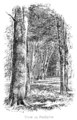 The New Forest its history and its scenery - page 112.png