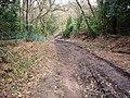 The Solent Way near Buttsash - geograph.org.uk - 381103.jpg