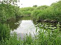 The Ted Ellis Nature Reserve - Fen Channel - geograph.org.uk - 1341548.jpg