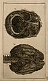 The brain, after Haller and Ridley. Engraving, 18th century. Wellcome V0007858ER.jpg