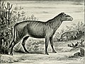The horse, its treatment in health and disease with a complete guide to breeding, training and management (1906) (14780662924).jpg