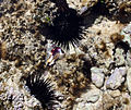 Tide pools in Mombasa.jpg