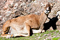 Tierpark Goldau (4980709948).jpg