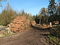 Timber operations - geograph.org.uk - 685898.jpg