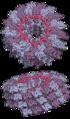 Tobacco mosaic virus tmv2.png