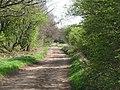 Track across Acomb Fell (3) - geograph.org.uk - 1387998.jpg