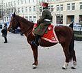 Training show horses. 2014. Wielkopolsie Uprising, Poznan (2).jpg