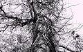 Tree - panoramio (21).jpg