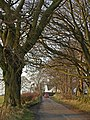 Tree lined road - geograph.org.uk - 700157.jpg