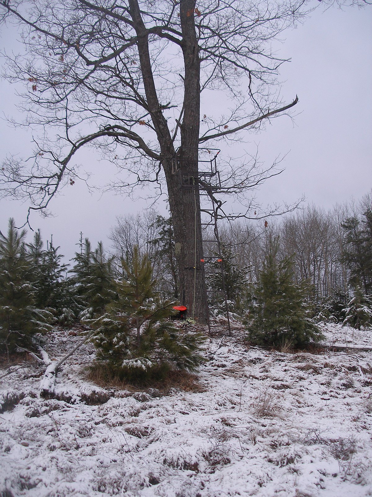 Tree Stand Wikipedia