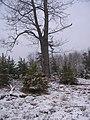 Tree stand.jpg