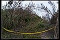Trees (19946585884).jpg