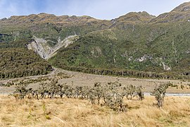 Trees at Kerin Forks Flat, Wilkin River Basin, Otago, New Zealand.jpg