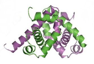 Tryptophan repressor - Ribbon diagram of the trpR protein