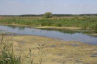 Trubizh-Borschiv-streambed-03.jpg