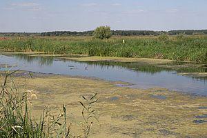 Русло річки трубіж поблизу с. борщів