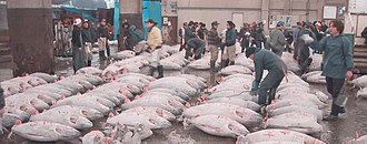Commission for the Conservation of Southern Bluefin Tuna - Frozen tuna at the Tsukiji market