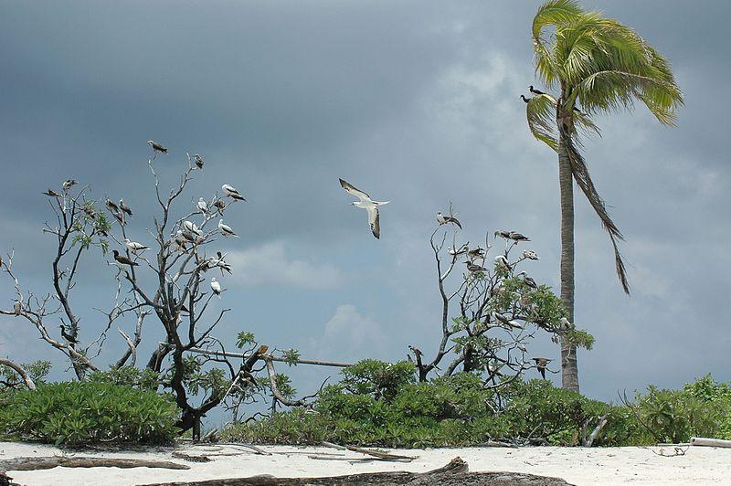 800px-tubbataha_reefs_natural_park-112045