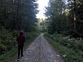 Turkey Hill State Forest, Richford, New York.jpg
