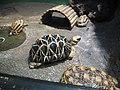 Turtle, Sunshine Aquarium.jpg