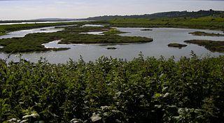 Two Tree Island Essex Wildlife Trust Nature reserve