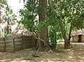 UNESCO Niokolo-Koba National Park Senegal (3687372732).jpg
