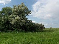 Udarnyk Hydrological Reserve (2019.05.31) 14.jpg