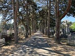 Une allée du cimetière ancien de Villeurbanne en mai 2020.jpg