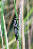 Unidentified Insect 6120 2.jpg