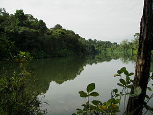 Water supply and sanitation in Singapore - The Upper Peirce Reservoir, one of the reservoirs located in Singapore's Central Catchment Nature Reserve.