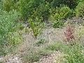 Upper Tarn Vista N106 Ispagnac 6306.JPG