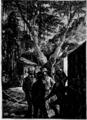 Verne - La Maison à vapeur, Hetzel, 1906, Ill. page 250.png