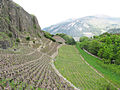 Vineyards near Sion castle, Switzerland.jpg