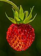 Walderdbeere Frucht-20210617-RM-124006.jpg