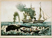 Baleine et les humains dans BALEINE 220px-Walfang_zwischen_1856_und_1907