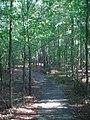 Walking path in the woods, Horseshoe Bend NMP.jpg