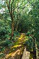 Walkpath through the woods.jpg