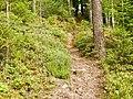Wanderweg - panoramio (69).jpg