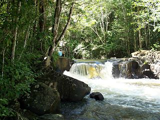 Guianan moist forests