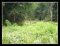 Wayanad - Pulpalli (4860059167).jpg
