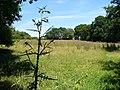 Wealden Landscape east of Lodsworth. - geograph.org.uk - 203140.jpg