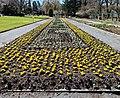 Wechselfloor in Botanischer Garten Hof 20200406 04.jpg