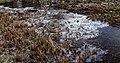 Weerribben. Moeras bedekt met een laagje ijs. Locatie Nationaal park Weerribben.JPG